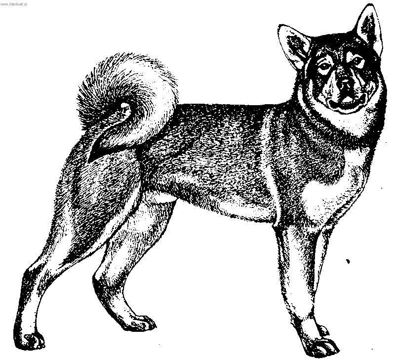 Jaemthund (Jamthund, Swedish Elkhound)