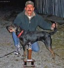 :  > Treeing Tennessee Brindle